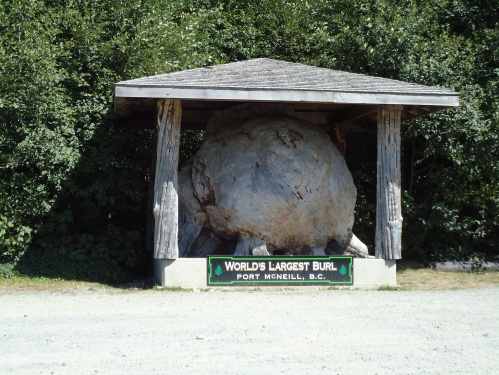 World Largest Burl